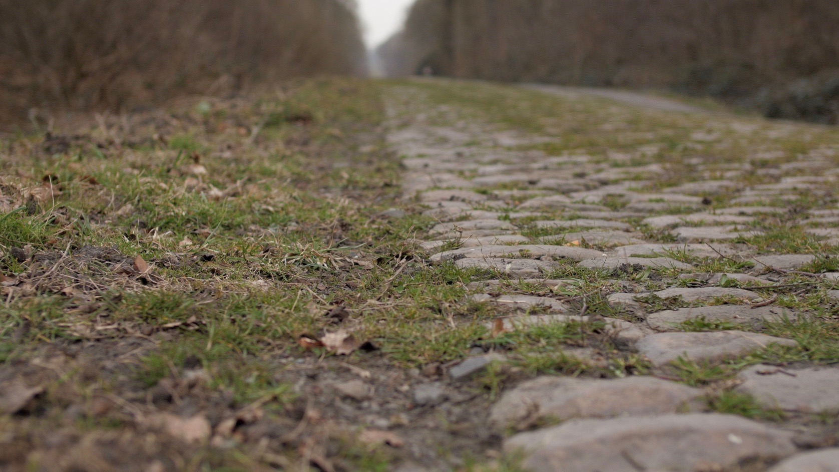 Close up of the infamous cobbles of Paris-Roubaix
